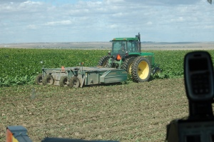 A Colorado sugarbeet field being harvested