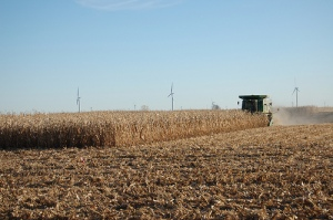 Corn being harvested earlier this fall